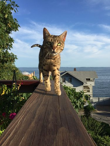 Pyewacket on the Roof Deck