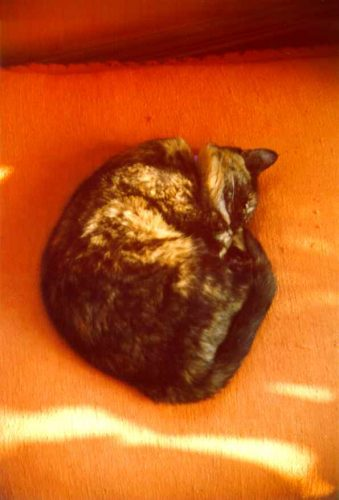 Echo curled up in a ball