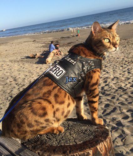 Jax sitting on the beach in his biker vest